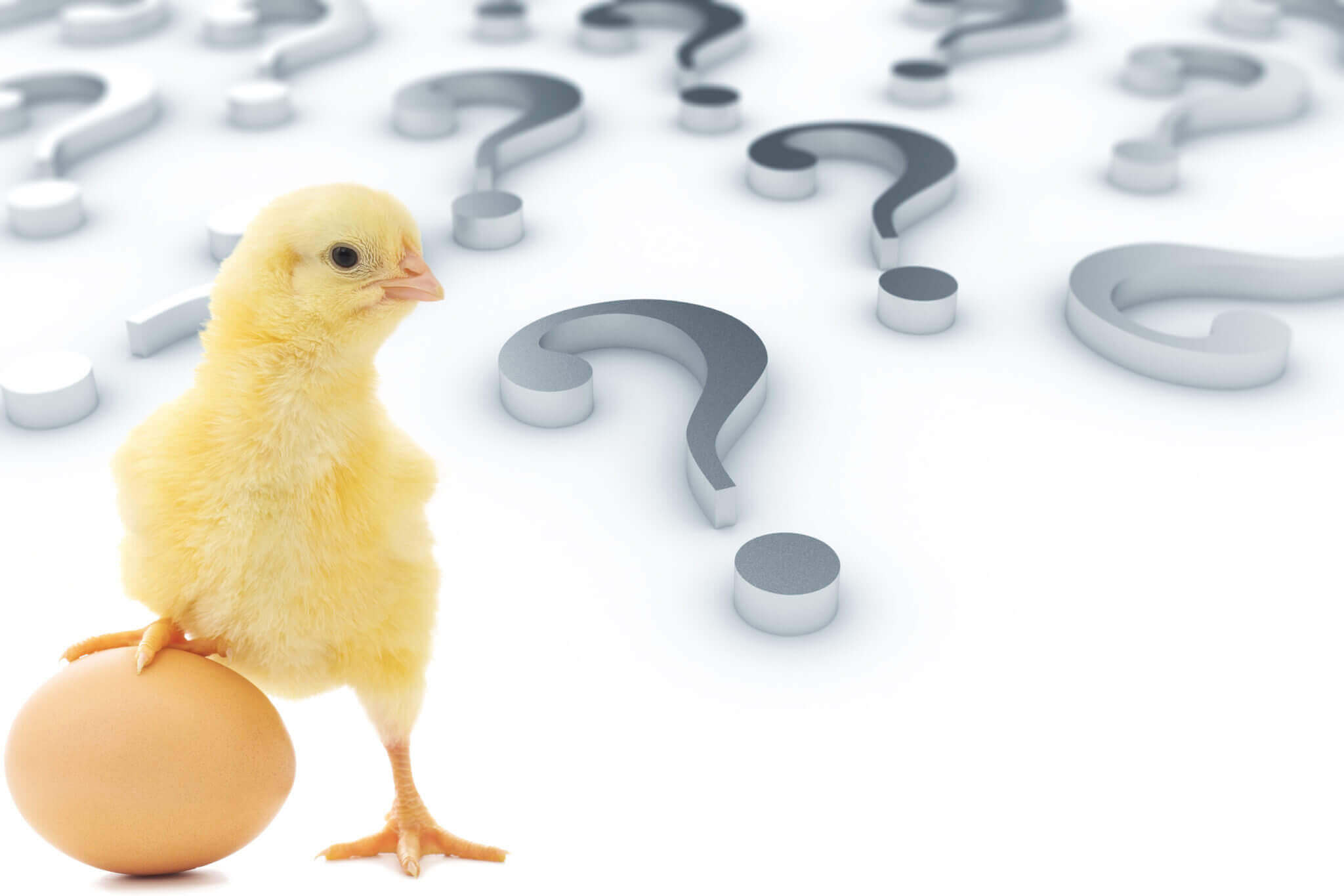 Which Came First, Chicken or the Egg (Revenue or Marketing)?