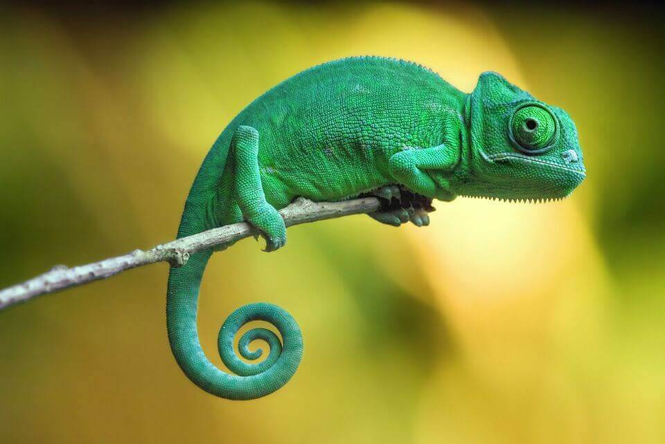 like this chameleon on a twig hotels must adapt or die