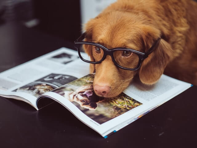 dog with a magazine as if he was looking for a hotel to go on holiday